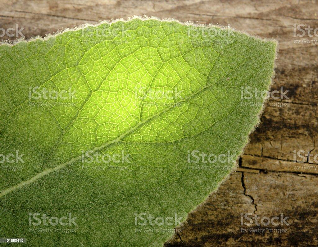 Grean Leaf stock photo