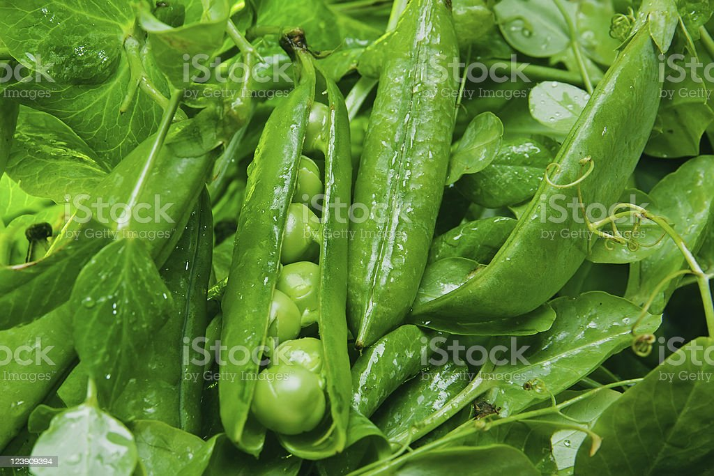 Grean peas in pod royalty-free stock photo