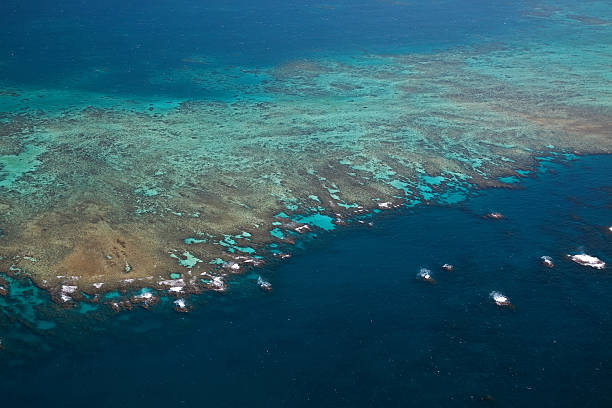 great barrier reef - great barrier reef marine park stock pictures, royalty-free photos & images