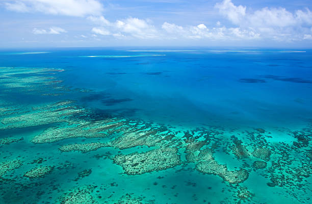 great barrier reef - great barrier reef stock pictures, royalty-free photos & images