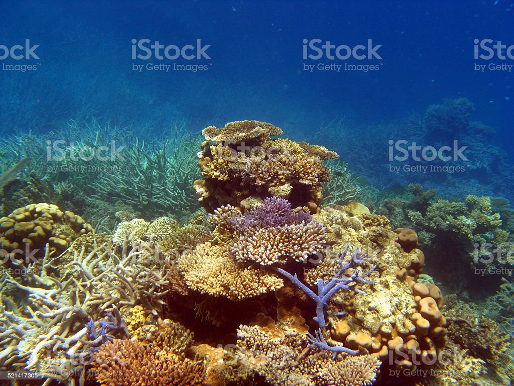 Great Barrier Reef, Queensland Australia stock photo