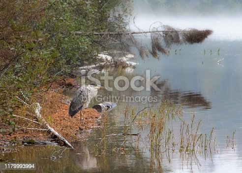 Quiet scenic landscape on the lake shore by a cold morning with heron standing still