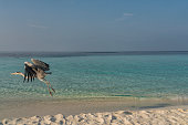 One large Great Blue Heron flies from sandy beach against turquoise sea and clear blue sky.