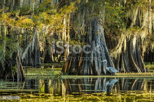 Caddo Lake in east Texas. World's largest bald cypress forest.