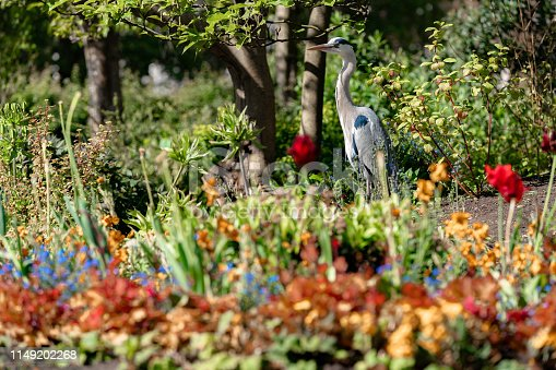 great blue heron on the grass and flowers