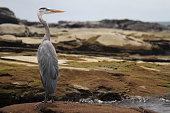 On the island of Santiago in the Galapagos, Ecuador