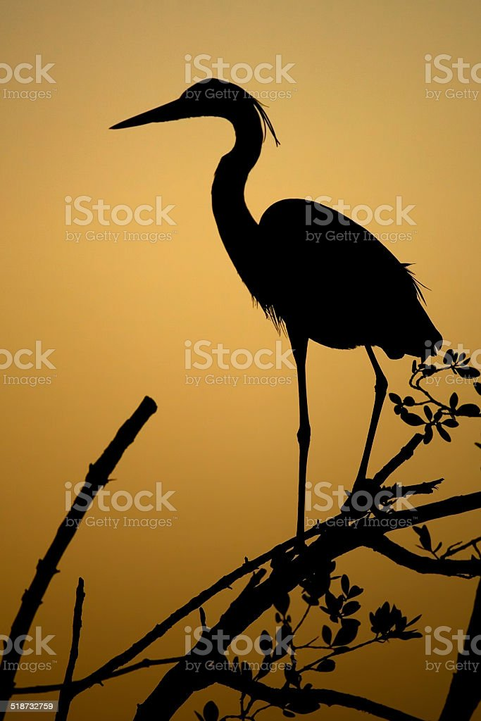 Great Blue Heron Silhouette stock photo