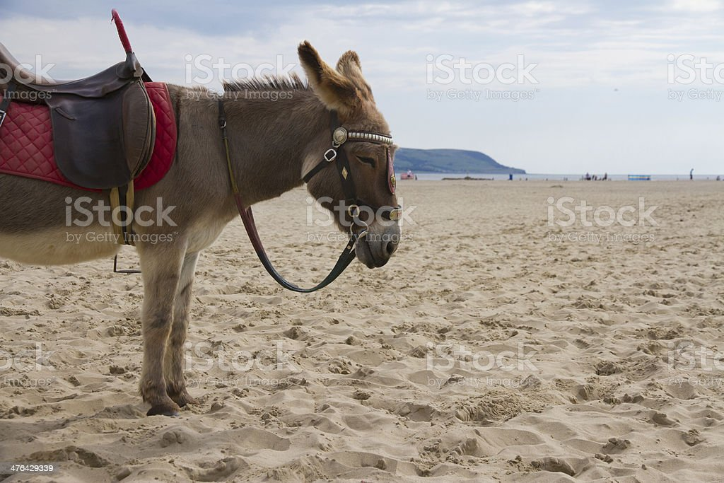 Great British Donkey rides royalty-free stock photo