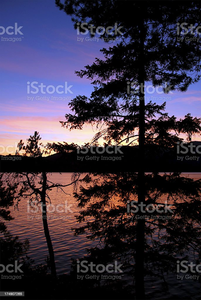 Great Canadian Forest stock photo