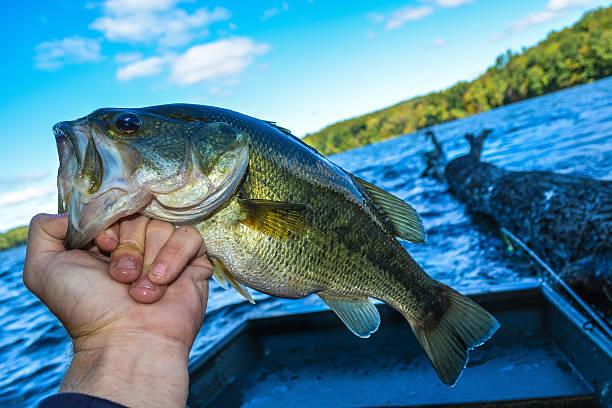 great catch stock photo