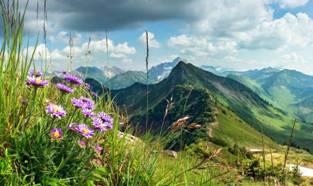 große klare sicht vom hohen berg mit blumen im vordergrund. - allgäu stock-fotos und bilder