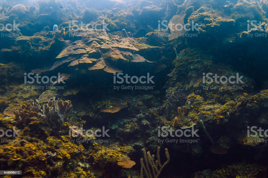 Great Coral wall stock photo