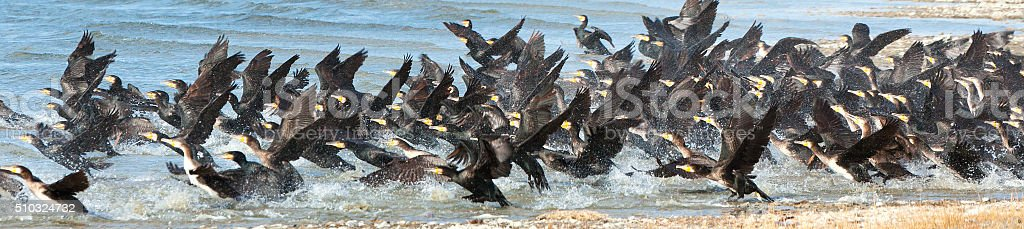 Great Cormorant Lake in northwestern Mongolia stock photo