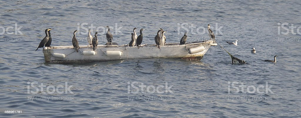 Great Cormorants on boat. royalty-free stock photo