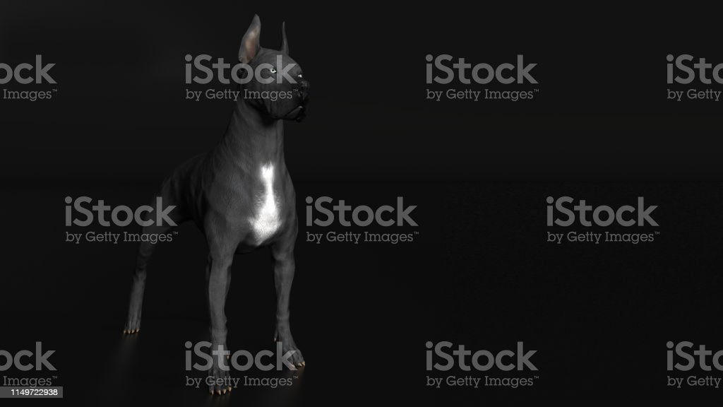 Great Dane Dog Standing Diagonal View 3d Render Stock Photo