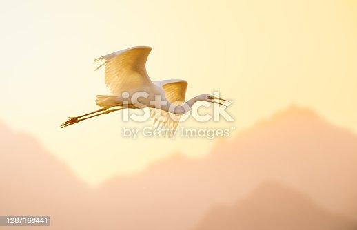 istock Great egret flying against sky. 1287168441