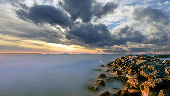 Great Egret standing on a jetty in the Chesapeake Bay at sunset
