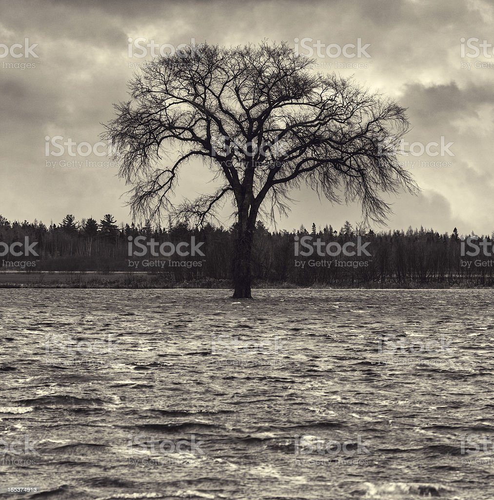 Great Flood royalty-free stock photo