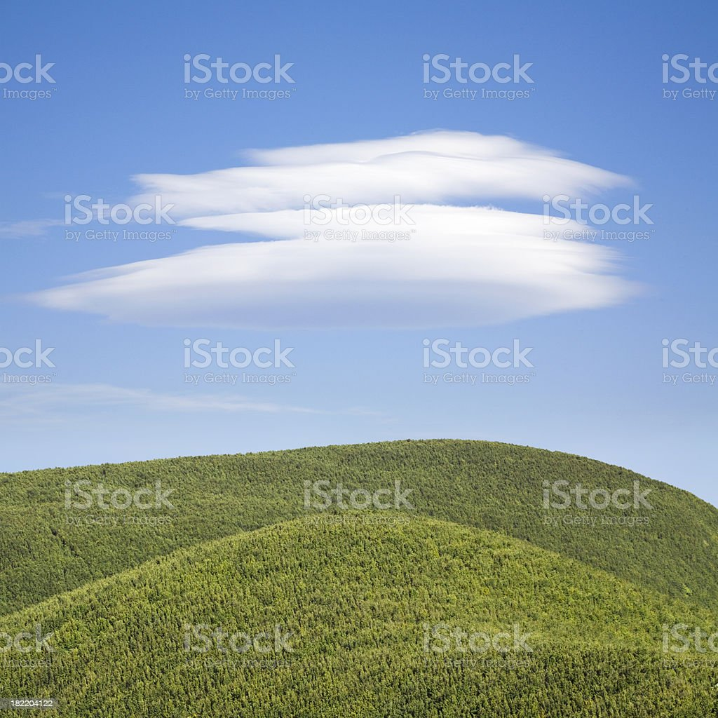 Great forest royalty-free stock photo