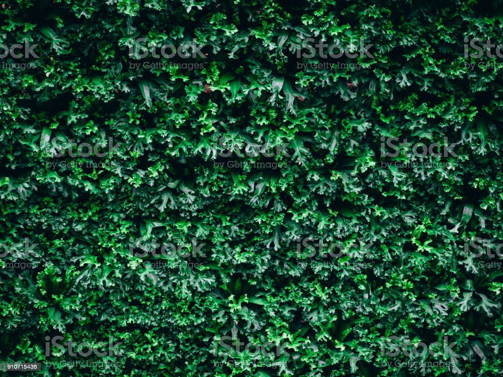 great green bush of fern in the forest, nature green background stock photo