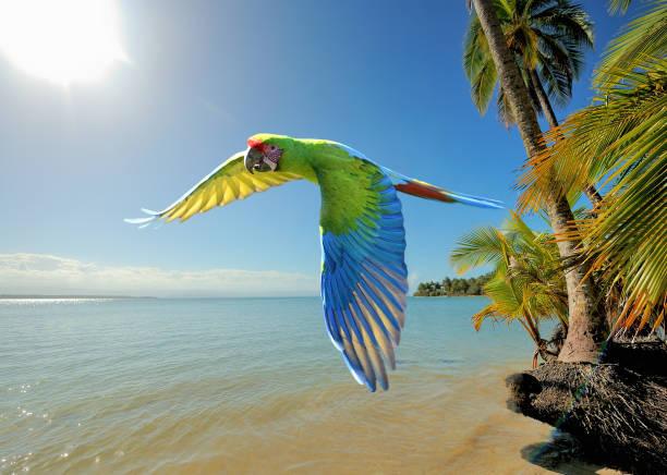 große grüne ara am strand in costa rica - seltene pflanzen stock-fotos und bilder