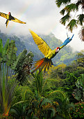 great green macaws (ara ambiguus) also known as buffon's macaws or military macaws flying through the rainforest in costa rica