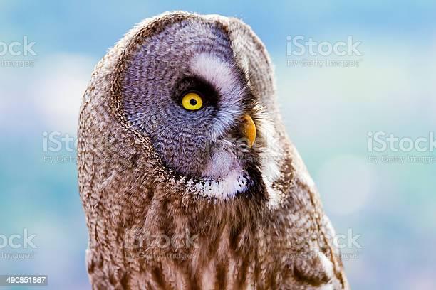 Great grey owl of lapland picture id490851867?b=1&k=6&m=490851867&s=612x612&h=bs zo07y6 kdoyium4ilnnehsg0oebh 9j4wnsyzkks=
