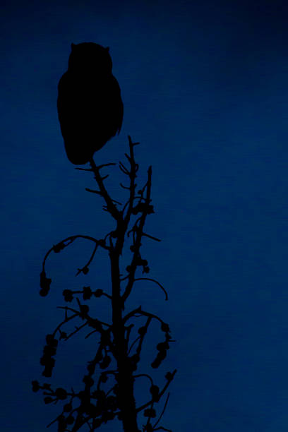 Great Horned owl in twilight stock photo