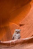 A great horned owl sits perched on a ledge in Owl Canyon, in Arizona