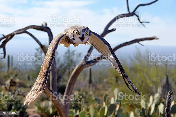 Great horned owl picture id507304878?b=1&k=6&m=507304878&s=612x612&h=q8t z tnxaa3 suj6qhulxuucozln5kw2znr18z nmc=