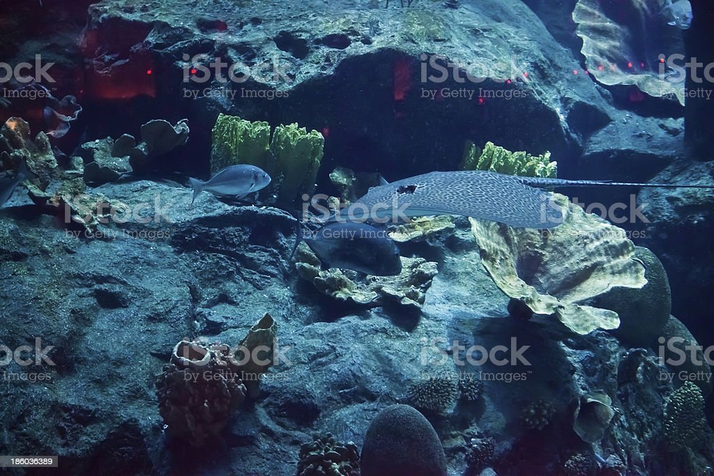 great marine Aquarius to Dubai royalty-free stock photo
