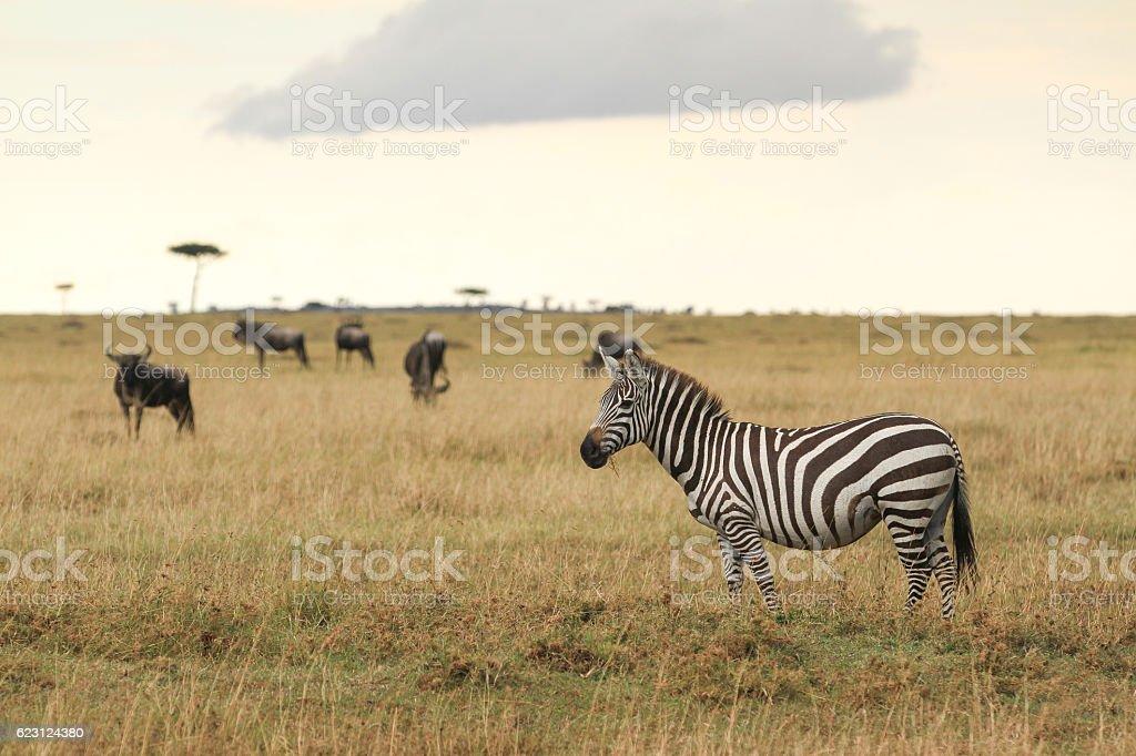 Great Migrations of Serengeti stock photo