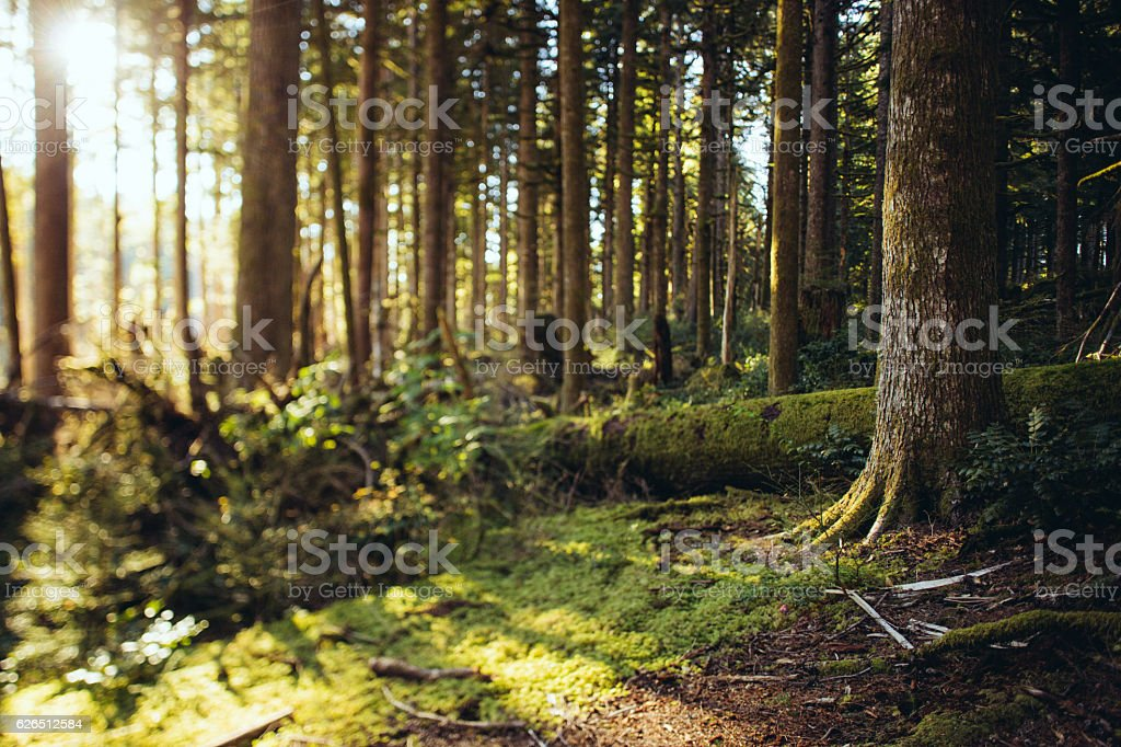Great Pacific Northwest Forest stock photo