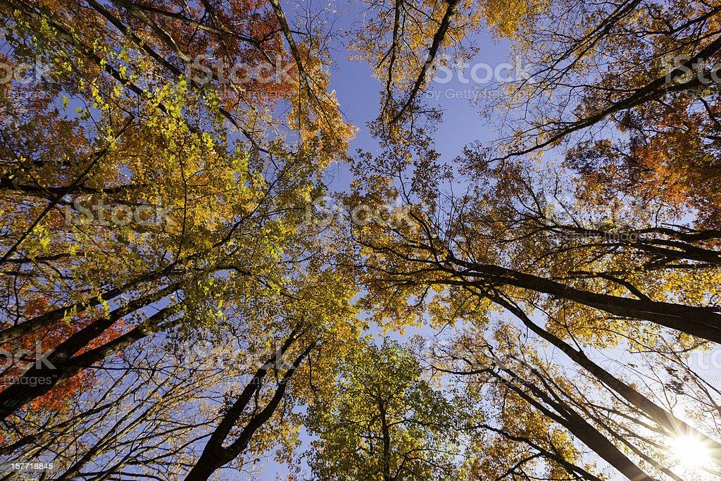 Great Smoky Mountains in Autumn royalty-free stock photo