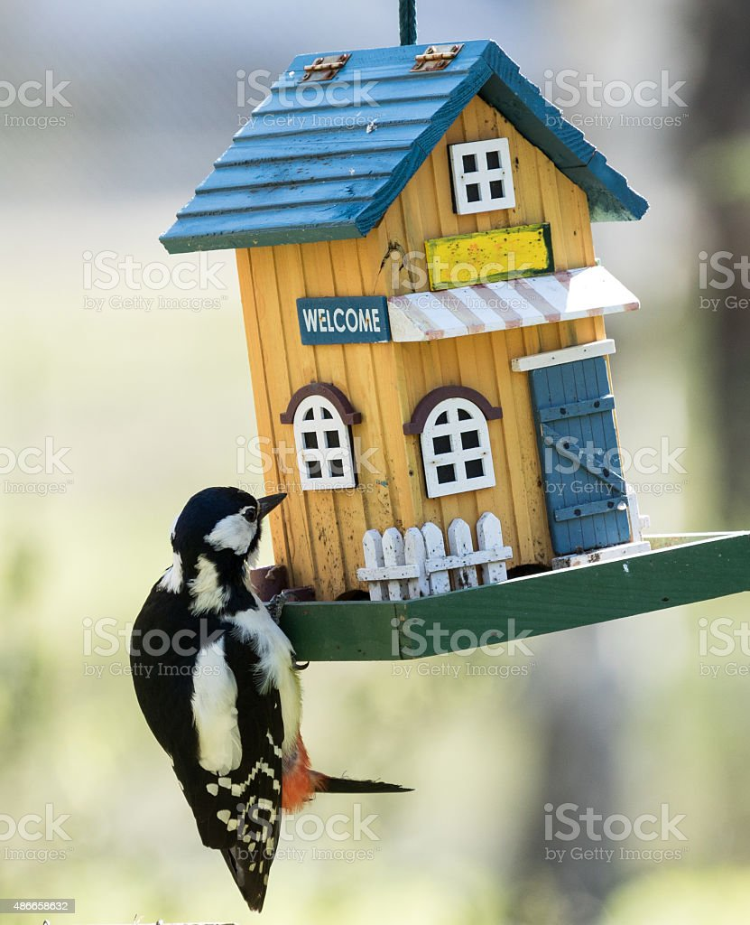 Great spotted woodpecker visiting a feeding place stock photo
