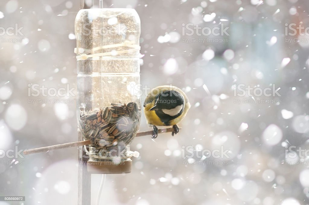Great tit in winter -bird fat ball in falling snow stock photo