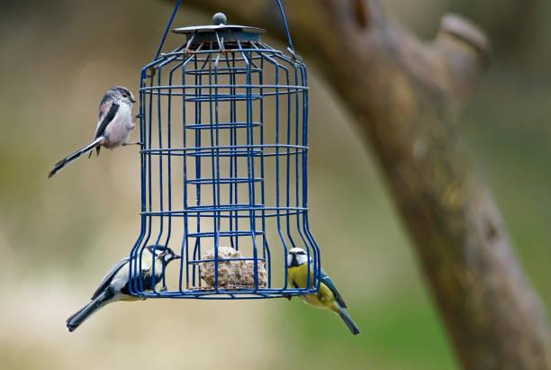 큰 작은, 긴 꼬리 tit과 새 피더에 bluetit - 오목눈이 뉴스 사진 이미지