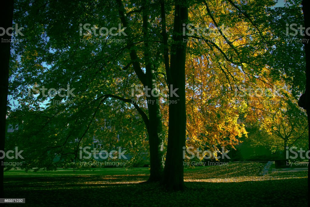 Great tree in autumn park stock photo
