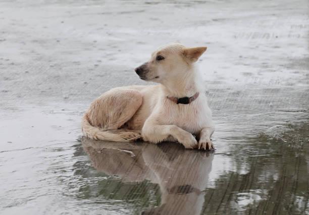 Great white dog picture id873917544?b=1&k=6&m=873917544&s=612x612&w=0&h=nuucwkhqlxeebyfkp6cbw0dytdum5ctpdxtznp5orok=