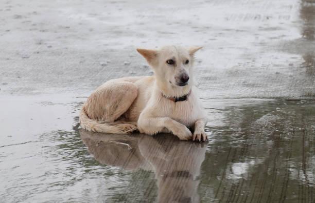 Great white dog picture id873917746?b=1&k=6&m=873917746&s=612x612&w=0&h=jyacoybdhgdngkibazktsiudzm5ke3u59krqpcqmsly=