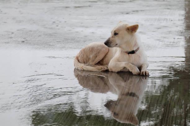 Great white dog picture id873917836?b=1&k=6&m=873917836&s=612x612&w=0&h=ldl0gzswwnd9keyl0vlb18mo7qy3fcka9ofpxz5lilo=