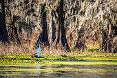 A portrait shot of a large common bird chilling around the park of Cajun Swamp Tours
