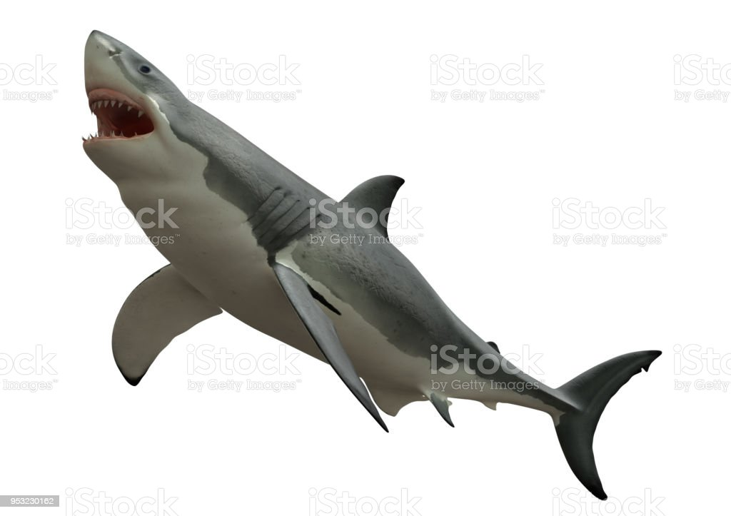 Great white shark about to bite something above stock photo