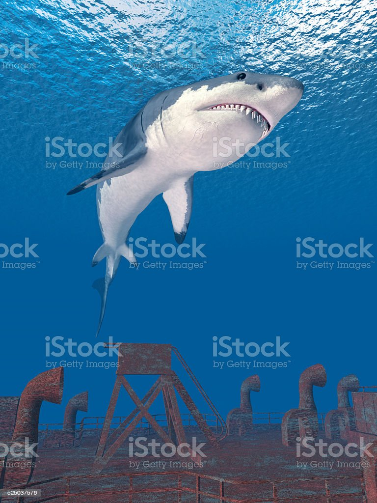 Great white shark and shipwreck stock photo