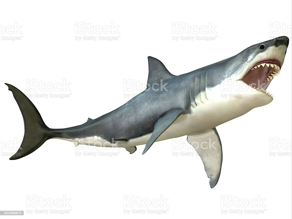 Great White Shark Attack stock photo