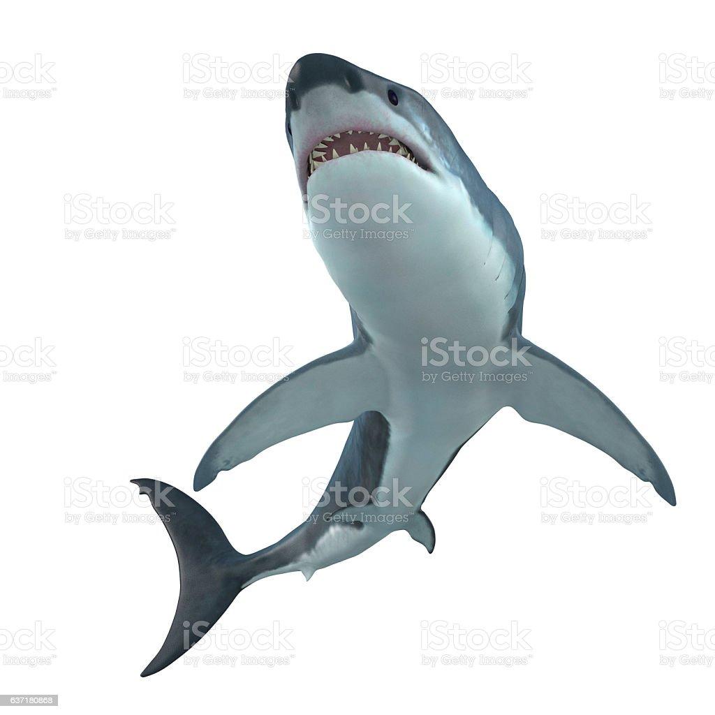 Great White Shark Cruising stock photo