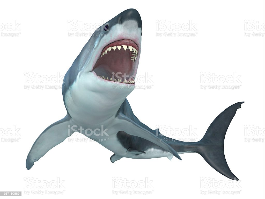 Great White Shark From Below stock photo