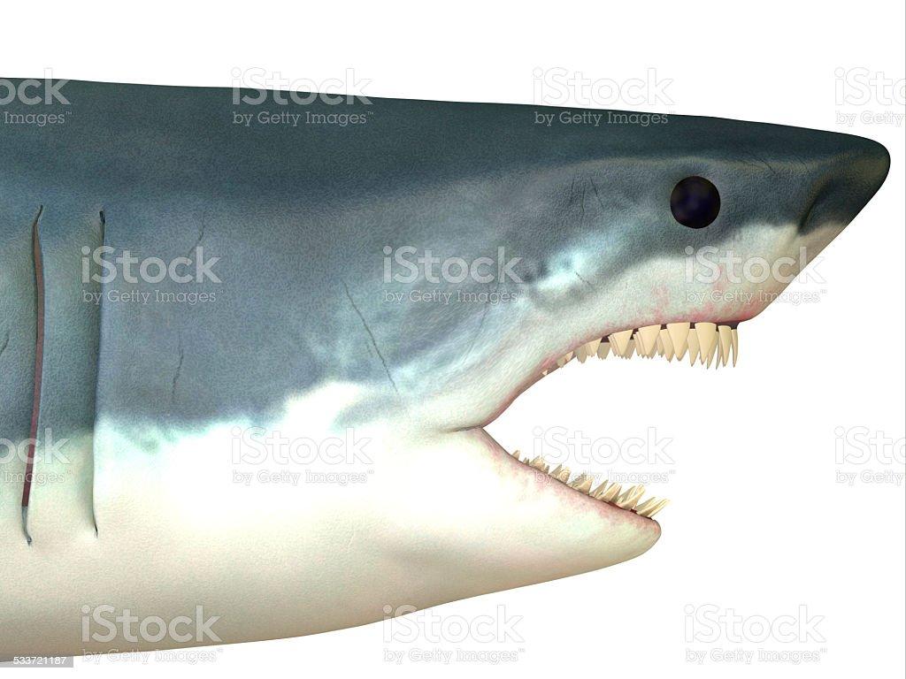 Great White Shark Head stock photo