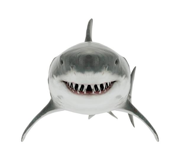 great white shark isolated. front angle - squalo foto e immagini stock