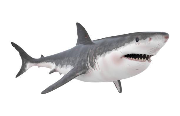 great white shark isolated - squalo foto e immagini stock